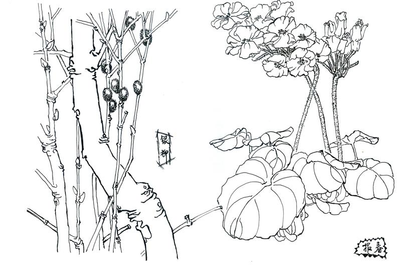 式进行的花卉白描临摹