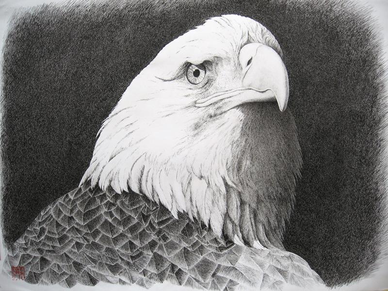 鹰(钢笔画)